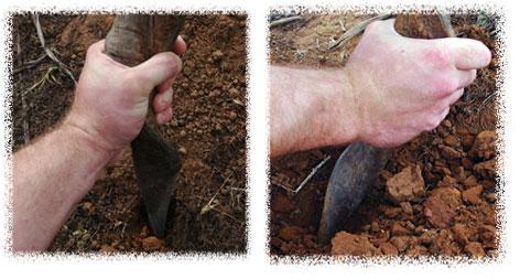 Empezando a arar la tierra con el cuerno